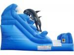 Whale Splash
